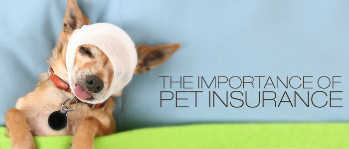 Pet insurance – Do you need it?